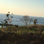 椿園の写真