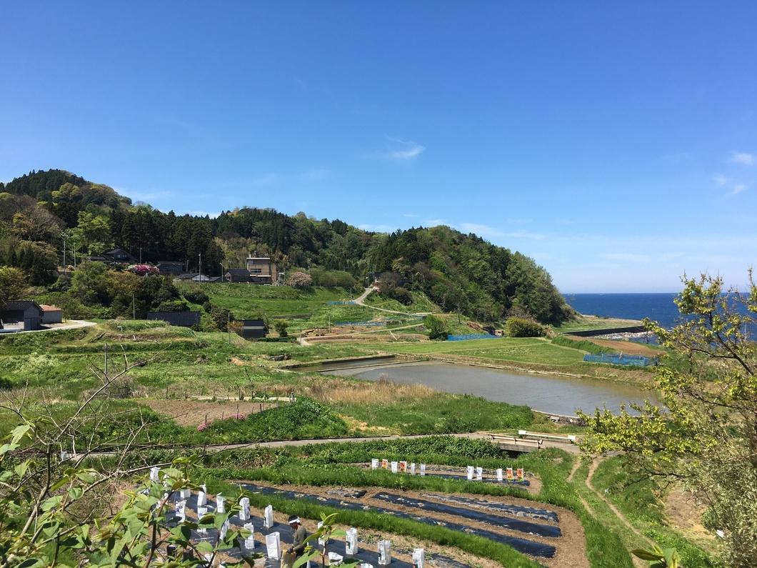 山からの豊かな水で育てた野菜